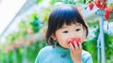 [강석기의 과학카페] 딸기가 지구를 한 바퀴 돈 사연