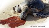 거북이 붉은 액체를 토한 이유