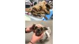 구조된 강아지의 변신 '감동'