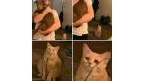 눈물 맺힌 고양이 '마음 아파'