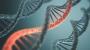 '크리스퍼'를 뛰어넘을 새로운 유전자 편집도구 '프라임'등장했다