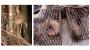 """美연구팀 """"코로나19 바이러스는 박쥐·천산갑 거치면서 인체 감염 능력 갖춰"""""""