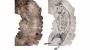 [화보] 1만7300년된 캥거루 암벽화