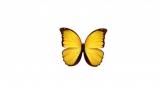 미 대륙에서 나비가 사라진다