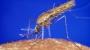 유전자 교정 기술로 모기 말라리아 전파 능력 없앴다