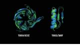 [Science토크]'알파폴드' 쇼크로 치열해지는 단백질 구조 분석 경쟁
