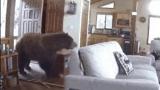문 부수고 들어온 대형 곰