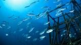 [프리미엄 리포트]전 세계 바다가 비어가고 있다