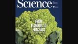 [표지로 읽는 과학]경이로운 기하학적 형태를 띠는 꽃의 비밀