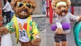 눈부신 패션, 뉴욕의 강아지