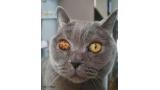 신비한 눈을 가진 고양이