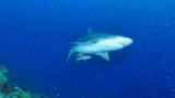 팔라우의 상어가 무시무시한 이빨을 드러내는 순간은?