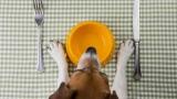 [퀴즈] 강아지 사료 고르는 법