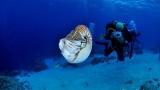 [팔라우에서 온 힐링레터] 오징어의 조상, 앵무조개를 만나다