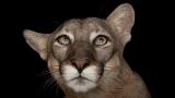 [12월 추천 과학체험] (2) 멸종위기 동물들, 우리 같이 #늦기전에 #함께지켜요