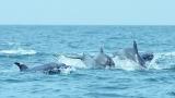 [지구를 위한 과학] 제돌이의 고향에서 남방큰돌고래 연구팀을 만나다
