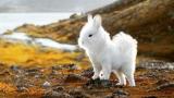 토끼와 강아지를 합쳤더니