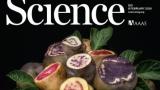 [표지로 읽는 과학] 기후변화 이길 '감자 2.0' 만든다