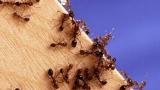 [이강운의 곤충記] 곤충은 왜 편리한 날개를 버렸나
