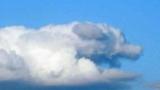 강아지를 닮은 구름