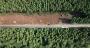[에코리포트]제주 비자림로 확장 논쟁