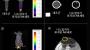 암세포 공격력 4배 향상된 나노입자-NK세포 개발