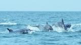 멸종위기종 고래, 위성으로 추적한다