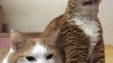 얼굴 없는 고양이 논란