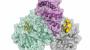 '약물 표적' 코로나19 바이러스 복제 효소 3D 정밀 지도 나왔다