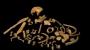 300만년전 아기의 '늦게 자란 뇌'가 인류와 유인원 운명 갈랐다