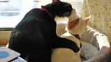 고양이끼리 코로나19 감염된다…전문가들