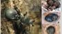 거북 개미의 진화는 거꾸로도 간다