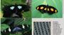 나비에게 배우는 '완벽한 검은색'