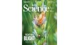 [표지로 읽는 과학] 밀 수확량 떨어뜨리는 '붉은 곰팡이병' 사라질까