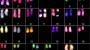 역사상 가장 정밀한 X염색체 '지도' 나왔다
