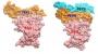슈퍼컴으로 코로나19 잡는 인공 단백질 설계했다