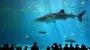 100년 사는 고래상어의 장수 비밀, 게놈에서 찾았다