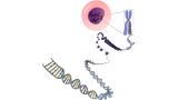 노벨화학상 받은 크리스퍼 유전자 가위는 무엇인가