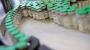 화이자는 영하 70도, 모더나 영하 20도…코로나19 백신 공급망 조건 속속 공개
