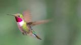 [강석기의 과학카페] 벌새 눈에는 가을 단풍이 어떻게 보일까