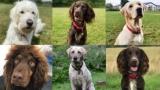 [코로나19 연구속보] 개는 코로나19 냄새를 맡을 수 있을까