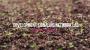 [랩큐멘터리] 미래 식량 보장하는 식물의 신진대사