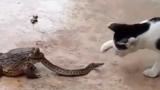 고양이와 뱀과 두꺼비, 삼각 관계