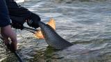'물고기가 작아지고 있다'…어로활동 '선택요인' 작용