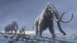 [강석기의 과학카페] 100만년 전 매머드 게놈 해독해보니