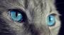 [잠깐과학] 개와 고양이 자외선 본다